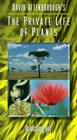 Private Life of Plants / Невидимая жизнь растений
