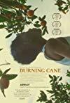 Burning Cane / Пылающий тростник
